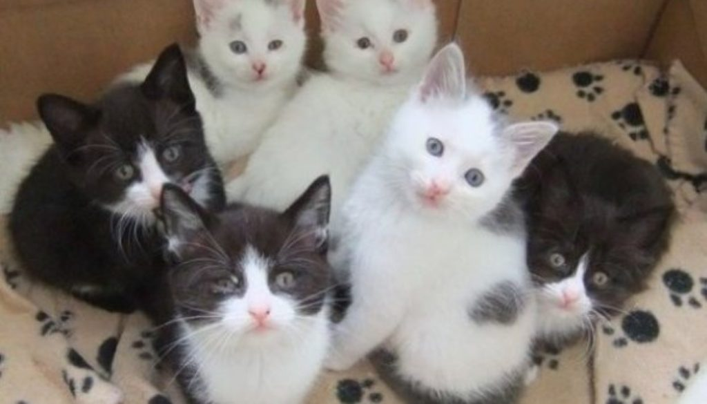 Foster-a-cat-and-litter-of-kittens