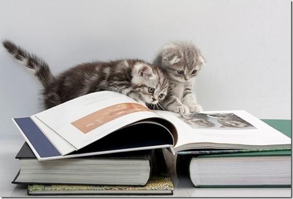 booksalekittens2