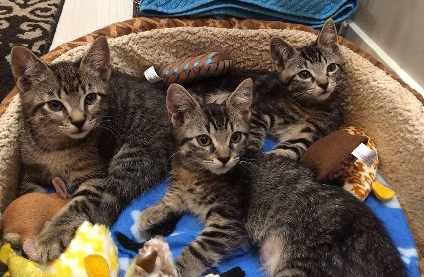 Adopt us!